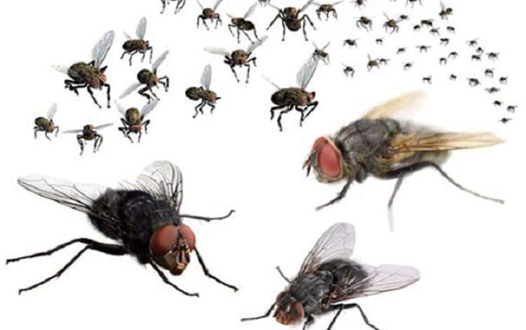 20 cách diệt ruồi trong nhà đơn giản mà hiệu quả không ngờ - Top10tphcm.com